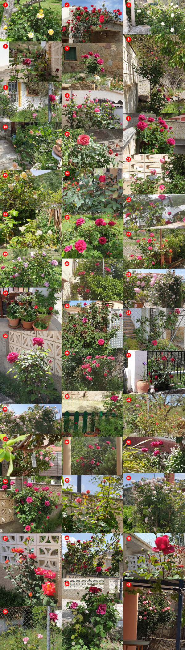 Rosales de Artaj
